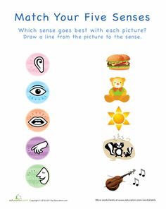 math worksheet : my five senses match up  my five senses worksheets and preschool : Five Senses Worksheets Kindergarten