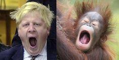 15 Orangutans That Look Like London Mayor BorisJohnson