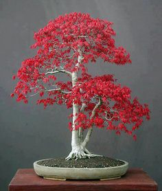 I want this tree now!