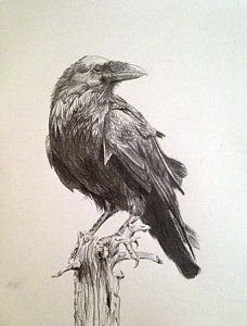 Crow Drawing - Raven by Megan Tong