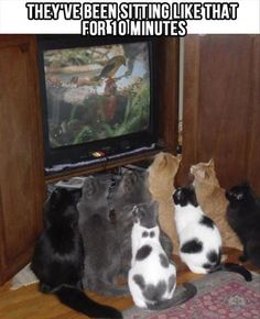 I have 6 cats.  Does anyone understand how hard it is to get them to all do the same thing at once?  This pic is amazing.