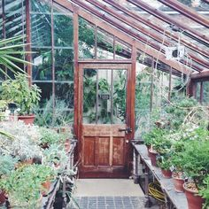 I have become a little bit obsessed with greenhouses lately. There is something so lovely about wandering around them and seeing all the things growing. If only I was any good at keeping them alive. When I reach that point then I will be a true grown up . This green house is at the Chelsea Physic Gardens. . . . #plantlife #greenhousegoals #greeninthecity #greenery #dayswithababy #botanicum #paintingleaves #botanicalillustrations