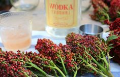 #Sumac #Martini - NonPoisonous grounded #Sumac berries is a #spice with a #tangy lemony flavor. #Infuse #Vodka 4 great #cocktails. Sumac spice is available online or in #Asian or Middle Eastern stores. . 1 1/4 oz #Velvet #Falernum . 2 oz sumac-infused vodka . 1 3/4 oz lime juice . 1-1/4 oz #pomegranate juice . . #recipe #foodie #cocktail #moonshine #tequila #gin #rum #scotch #martinis #beer #bourbon #booze #alcohol #margaritas #bar