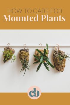 Mounted plants are everywhere! They're a fun way to display epiphytic plants like Hoyas, Bromeliads, Ferns, House Plant Care, Ferns, Houseplants, Clever, Bloom, Place Card Holders, Display, Board, Diy