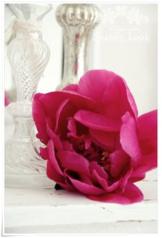 Look at this peony.
