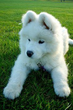 so cute puppy........