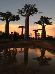 Lawrence Foglia took this dramatic shot of Madagscar's Baobab tree also on the Madagascar Marine Conservation and Diving project. This photo is the winner of April volunteer photo of the month! l www.frontiergap.com l #photography #travel #travelphotography #giveback #newyear #2013 #volunteer