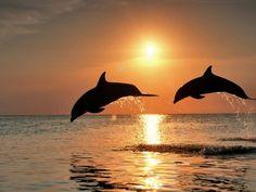 Golfinhos de Fernando de Noronha  http://hestiloh.blogspot.com.br/