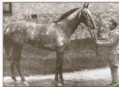 "The ""Flying Filly"", Mumtaz Mahal 1923 Champion Juvenile filly and champion sprinter in England, Mumtaz Mahal was the best daughter of legendary juvenile The Tetrarch, from whom she had inherited her. Majestic Horse, Beautiful Horses, Horse Racing, Race Horses, Horse Markings, Sport Of Kings, Thoroughbred Horse, White Horses, Appaloosa"
