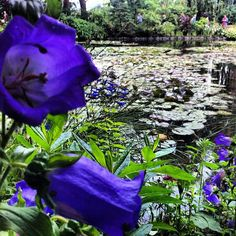 Monet's lilly pad inspiration #travel #france