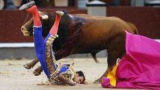 Notiferias Toros en Venezuela y el Mundo: Antonio Puerta sufre una cornada de 25 centímetros...