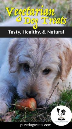 Cat Nutrition Guide Feeding vegetarian dog treats needn't be a compromise on taste and is often much healthier. Here's the benefits of meatless treats, how to make your own, and where to buy the best ones. Pet Care Tips, Dog Care, Dog Treat Recipes, Dog Food Recipes, Vegetarian Dog Food Recipe, Best Treats For Dogs, Cat Ages, Dog Diet, Aggressive Dog