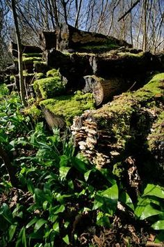 Dead wood a vital habitat for garden wildlife  http://www.wildlifeextra.com/do/ecco.py/view_item?listid=1=1157=8314=0#cr