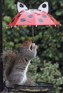 Squirrel holding umbrella.