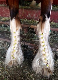 Omg soo schön by . Kommentiert doch mal was schönes ! Cute Horses, Pretty Horses, Horse Love, Beautiful Horses, Beautiful Beautiful, Horse Mane Braids, Horse Braiding, Horse Hair, Horse Photos