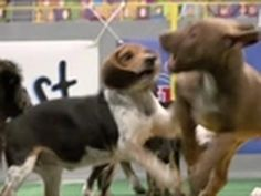 Puppy Bowl  this is coming up because of the super bowl  watch animal plant this weekend to see it