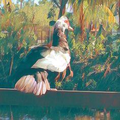 Enjoying the #view #naturephotography #naturelover #painted #views #lush #park #bird