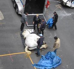 The horse drwan carriages are ABUSE. Please sign and share CharlieDeadCarriageHorseNYC.jpg