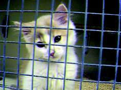 This is appalling !!!! PLEASE SIGN AND REPIN -   Stop kitten experiments at Cardiff University