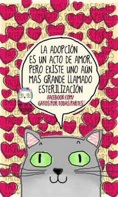 https://www.facebook.com/gatos.por.todas.partes/photos/pb.207350112727036.-2207520000.1415027758./515799125215465/?type=3