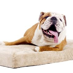 brindle 4 inch solid memory foam orthopedic dog bed with removable waterproof velour cover large