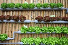 You can grow plenty of food and plants in gutters! You can attach them to the side of a building or fence or hang them one above the other on chains or rope which makes a nice &qout;green screen&qout;. Make sure you drill some holes into the bottom of each section for adequate drainage. Use some compost-rich…