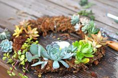 Vida Suculenta: Como fazer uma guirlanda de plantas suculentas