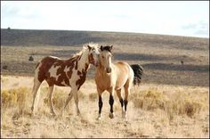 """Compare """"Spirit: Stallion of the Simoron"""" to this picture...these two look familiar?"""