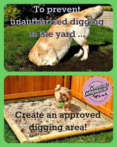 How to enjoy your yard and garden with a dog! Dogs dig. Dogs eat things. It's what dogs do. As ahomeowneror renter, we have to keep the yard healthy, clean, and looking great. As a dog guard…
