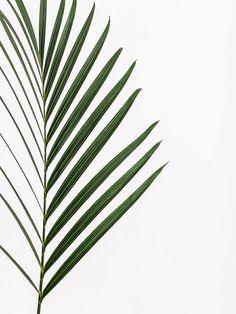 Pinterest: venezianaylor palm
