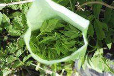 VUOHENPUTKEA PUSSISSA Parsley, Celery, Herbs, Vegetables, Food, Vegetable Recipes, Eten, Herb, Veggie Food