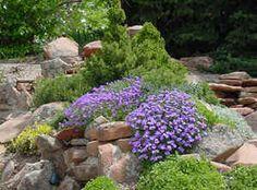Rock Gardens: Alternatives to Turf
