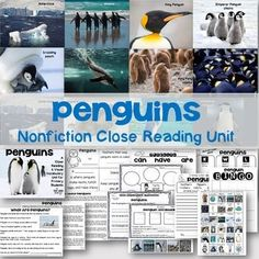 Primary students LOVE learning about penguins!  This nonfiction unit will introduce close reading to your young students while growing their schema and vocabulary simultaneously. Show the slideshow to students first- beautiful real-life photographs and simple vocabulary words to help grow schema and connect with the vocabulary in the close reading texts.