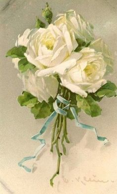 romantic white roses tied with satin blue ribbon