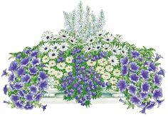 Balkonpflanzen-Set » Blau-Weißer Traum« ab 18,99€. Balkonpflanzen-Set »Blau-Weißer Traum«, Standort: Sonne, Blütezeit: Frühjahr bei OTTO
