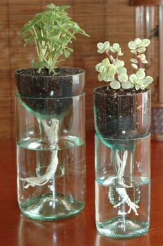 Did you know that you can convert old wine and liquor bottles into self watering planters for a little window garden? Be careful when cutting glass, score one single circle around the bottle, then alternate between hot and cold water on the upper portion until it literally pops right off. Always wear eye protection. Sand the edges down when you're done.    Those are strings hanging down from the dirt, they function as wicks to keep the moisture level in the dirt.