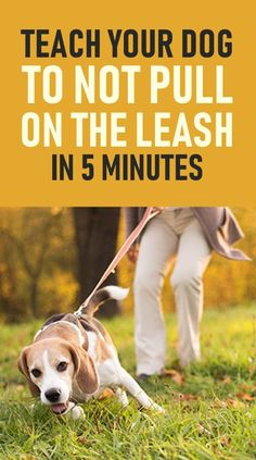 dog walking Heres How You Can Stop Your Dog Pulling On The Leash. These training tips will help you overcome leash pulling very quickly and will also make you enjoy walking your dog on a loose leash. Dog Pitbull, Puppy Husky, Samoyed Dog, Dogs Tumblr, Background Grey, Best Dog Training, Training Pads, Training Classes, Agility Training