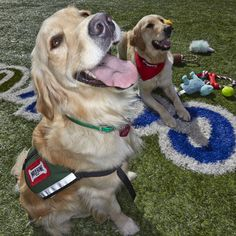 Ralph and Chanel, Therapy Dogs at Cook Children's Fort Worth - great read :)