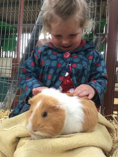 Meet and hold a Guinea Pig at Farmer Palmer's Farm Park | Poole | Dorset. Kids days out ideas in Dorset | UK