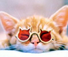 A nother cool cat