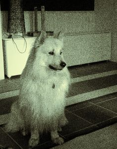 Daily photo journal 167_365_Koira Päivän kuva #timpen #dailyphoto #koirat #dog