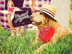 Wedding-Dog-Tux