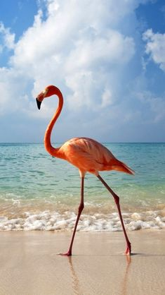 I need to go to a beach where there are flamingos instead of seagulls!