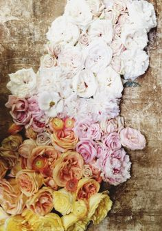 Roses from Susan's and others . photograph by rinne allen