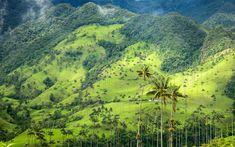 Valle de Cocora, Quindío, Colombia   Nature's color palette is astounding.