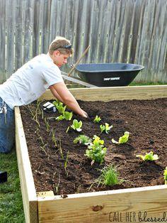 easy DIY raised bed garden