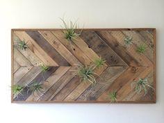 Reclaimed Barn wood Chevron arrow herringbone Wall art with air plants. Herringbone Wall Art, Chevron Wall Art, Pallet Wall Art, Wood Wall Art, Diy Pallet, Pallet Ideas, Pallet Walls, Painted Wood Walls, Into The Woods