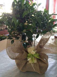 Giardini e Paesaggi bomboniere piante grasse e bonsai, per matrimoni ed eventi speciali. A Roma