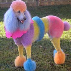 RAINBOW DOG!!!
