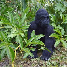 Gorilla. Needlefelting Needle Felting, Animals, Animales, Animaux, Animal, Animais, Felting